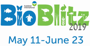 BioBlitz with date